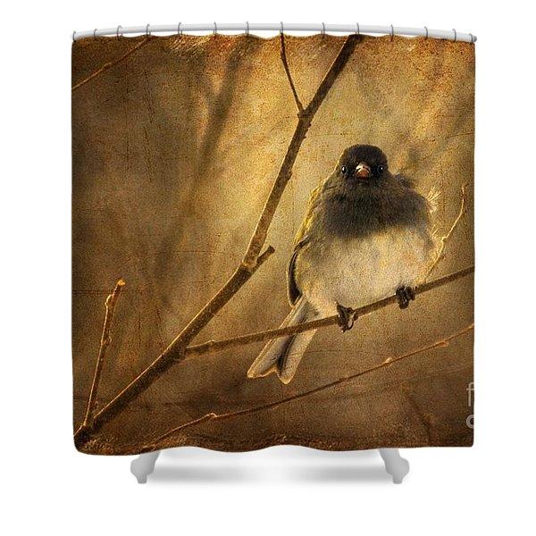 Backlit Birdie Being Buffeted  Shower Curtain