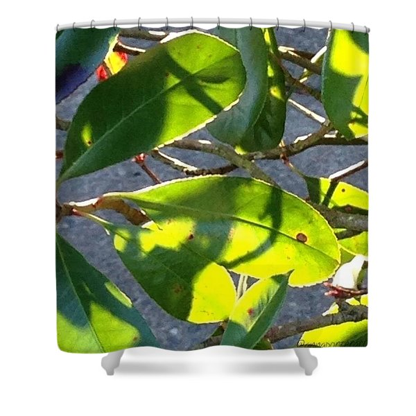 Backlit Leaves, Afternoon Light, Late Shower Curtain