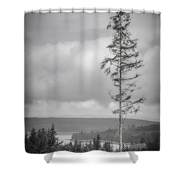 Tall Tree View Shower Curtain