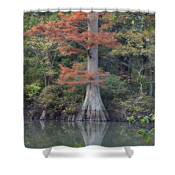Bald Cypress In White River Nrw Arkansas Shower Curtain