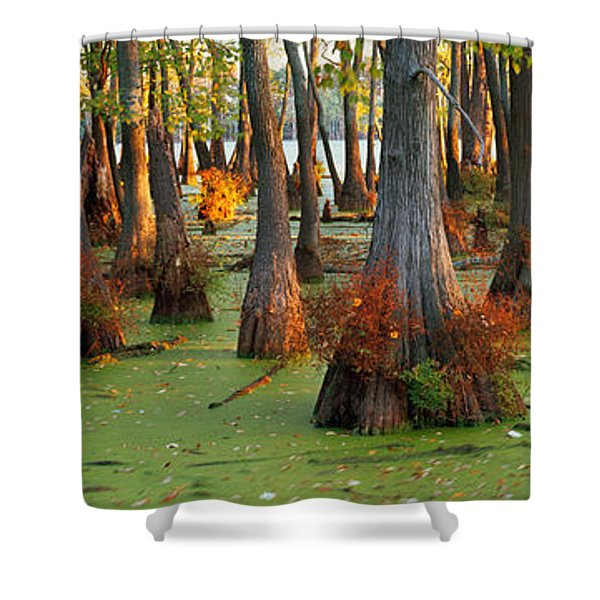 Bald Cypress Trees Taxodium Disitchum Shower Curtain