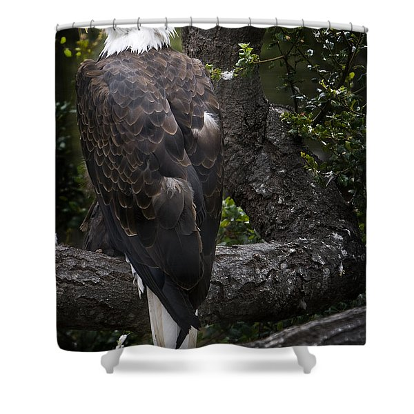 Shower Curtain featuring the photograph Bald Eagle by David Millenheft
