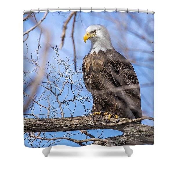 Bald Eagle On The Iowa River Shower Curtain