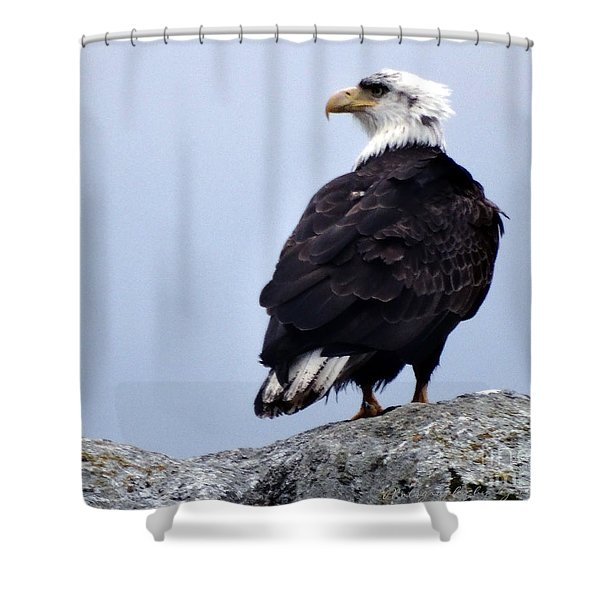 Bald Eagle Watching Shower Curtain