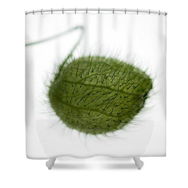 Balloon Plant Shower Curtain