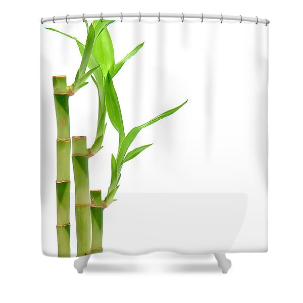 Bamboo Stems In Black Vase Shower Curtain