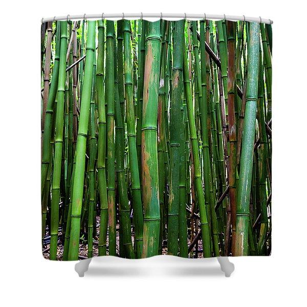 Bamboo Trees, Maui, Hawaii, Usa Shower Curtain