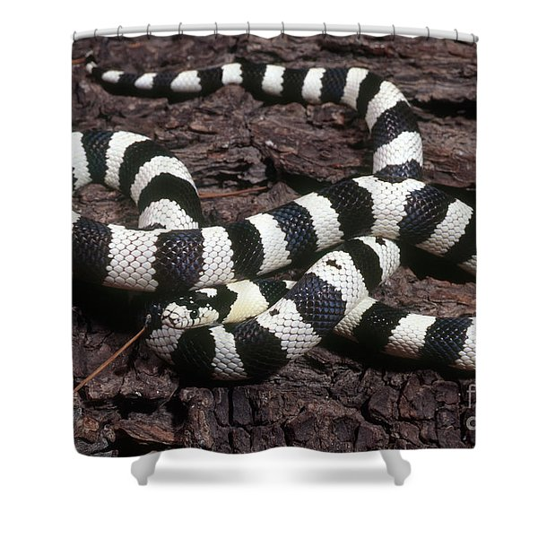 Banded Kingsnake Shower Curtain