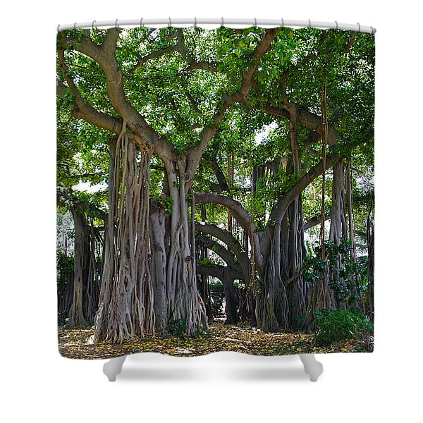 Banyan Tree At Honolulu Zoo Shower Curtain