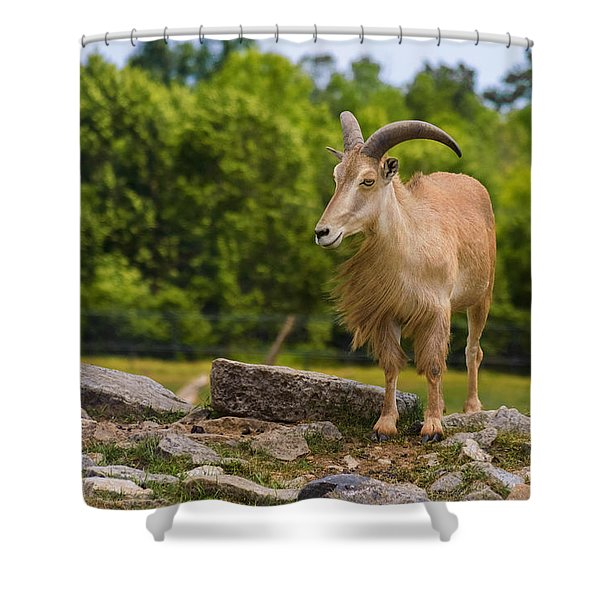 Barbary Sheep Shower Curtain