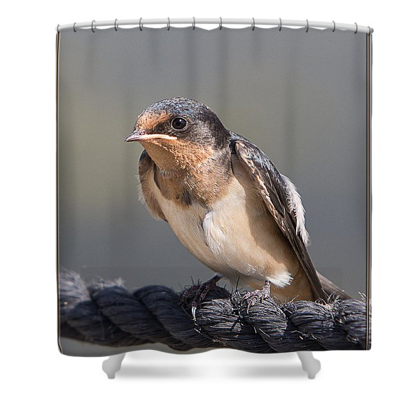 Barn Swallow On Rope I Shower Curtain