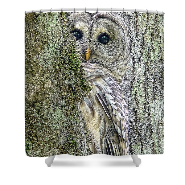 Barred Owl Peek A Boo Shower Curtain