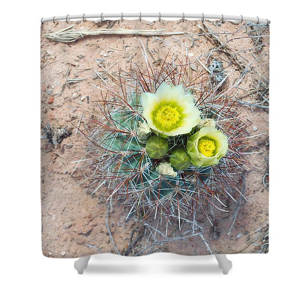 Barrel Cactus Blossoms Shower Curtain