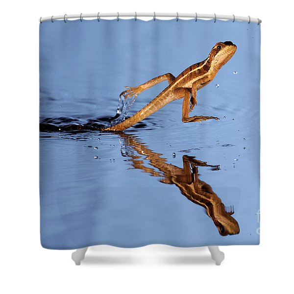 Basilisk Running Across Water Shower Curtain