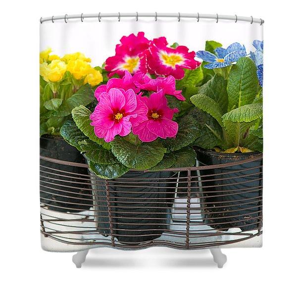 Basket Of Primroses Shower Curtain