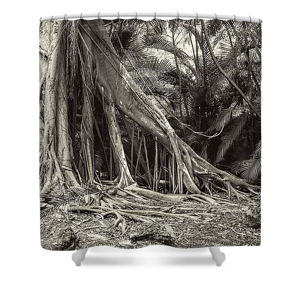 Strangler Fig Shower Curtain