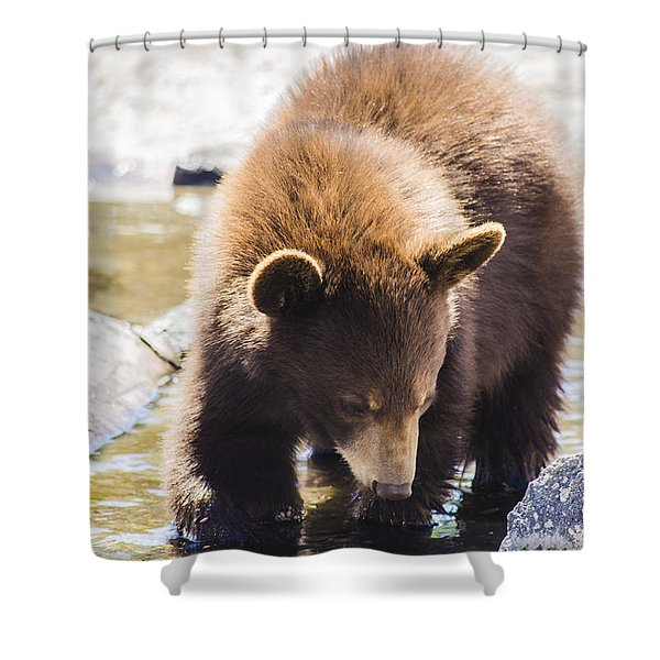 Bear Cub Shower Curtain