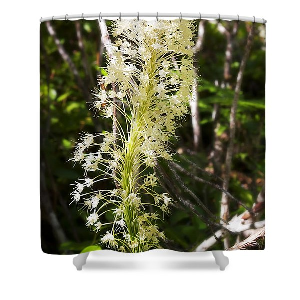 Bear Grass No 3 Shower Curtain