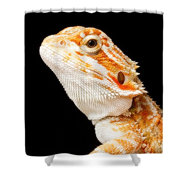 Bearded Dragon Pogona Sp Shower Curtain