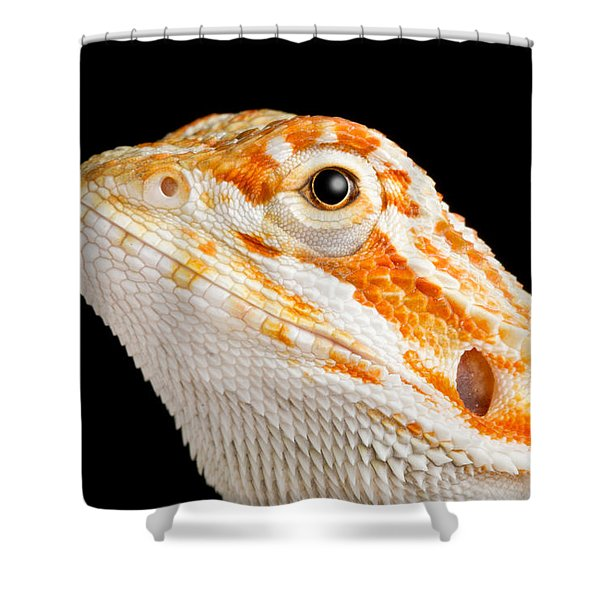 Bearded Dragon Pogona Sp. Portrait Shower Curtain
