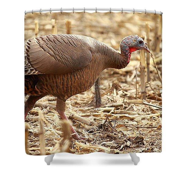 Bearded Wild Turkey Hen Shower Curtain