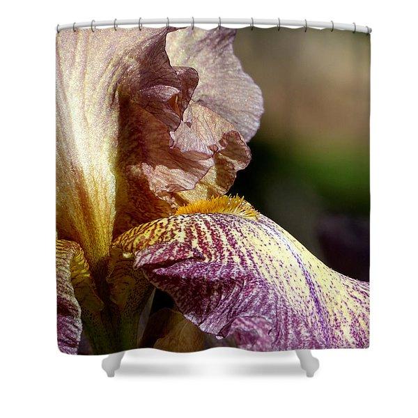 Bearded Iris #1 Shower Curtain