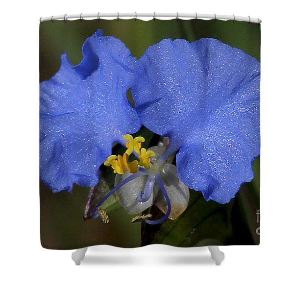 Beautiful Blue - Erect Dayflower Shower Curtain