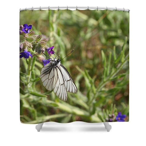 Beautiful Butterfly In Vegetation Shower Curtain