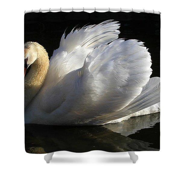 Beautiful Display Shower Curtain