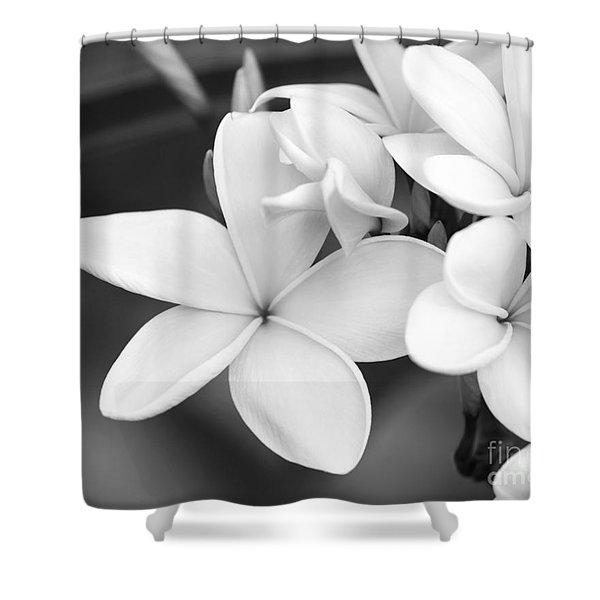 Beautiful Plumeria In Black And White Shower Curtain
