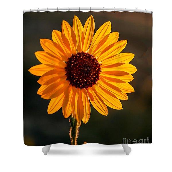 Beautiful Sunflower Shower Curtain