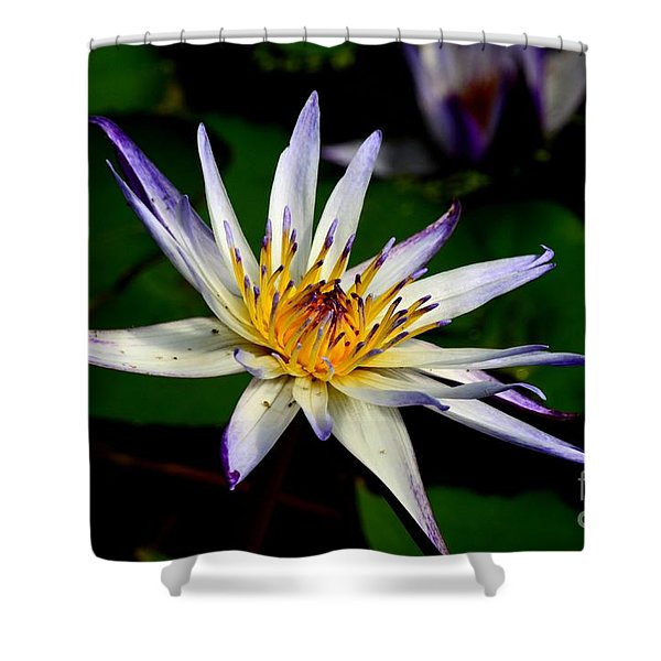 Beautiful Violet White And Yellow Water Lily Flower Shower Curtain