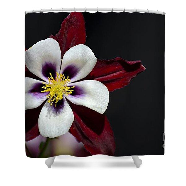 Beautiful White Petal Yellow Stamen Purple Shades Aquilegia Columbine Flower Shower Curtain