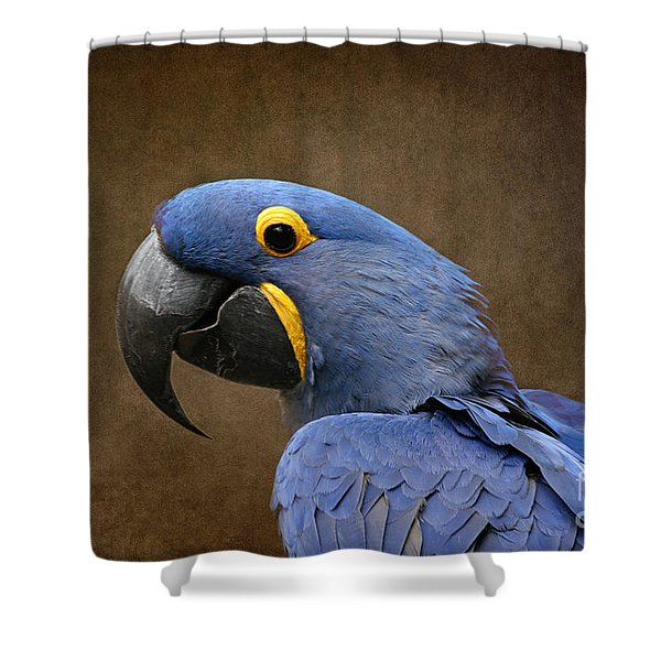 Beauty Is An Enchanted Soul - Hyacinth Macaw - Anodorhynchus Hyacinthinus Shower Curtain