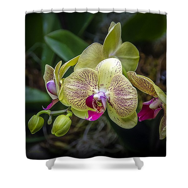 Beauty Of Orchids 3 Shower Curtain