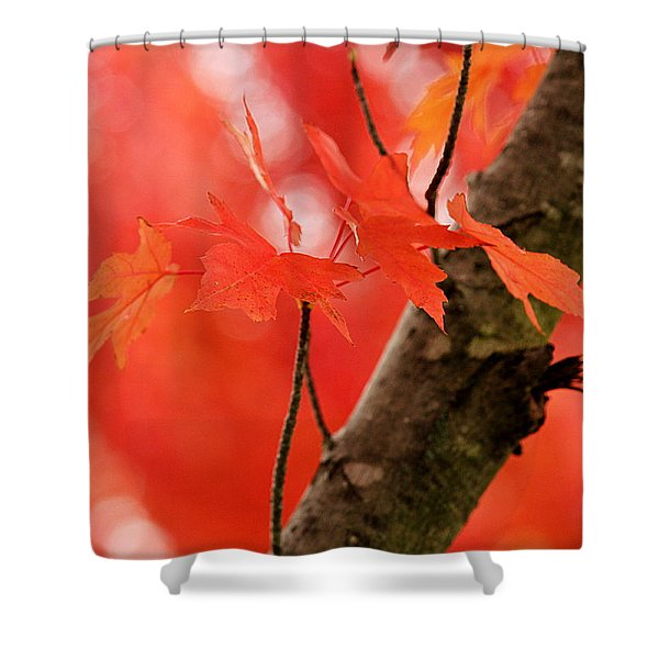 Beauty Of Red Shower Curtain