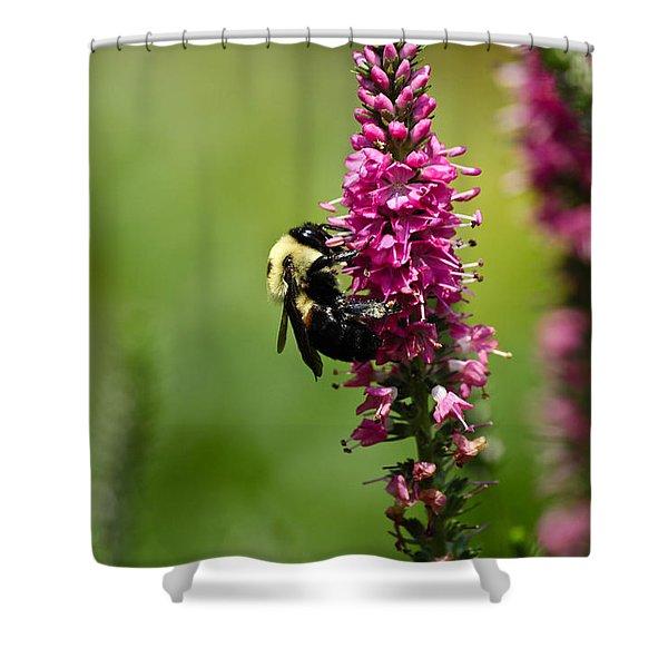 Bee Heaven Shower Curtain