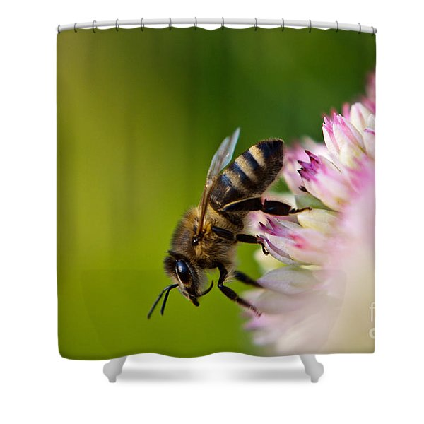Shower Curtain featuring the photograph Bee Sitting On A Flower by John Wadleigh