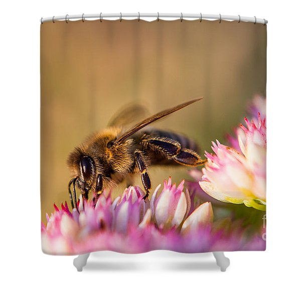Shower Curtain featuring the photograph Bee Sitting On Flower by John Wadleigh