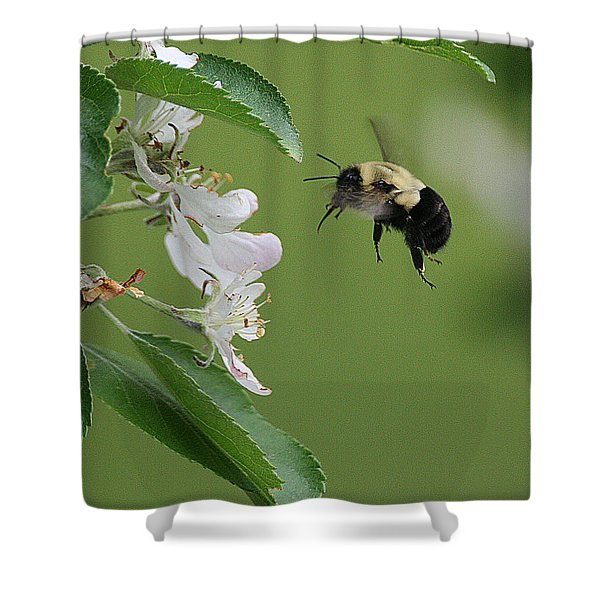 Shower Curtain featuring the photograph Bee With Apple Blossoms by William Selander