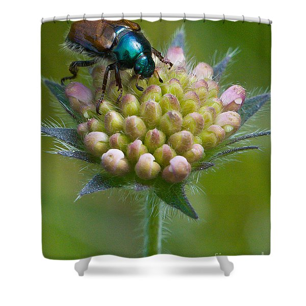 Shower Curtain featuring the photograph Beetle Sitting On Flower by John Wadleigh