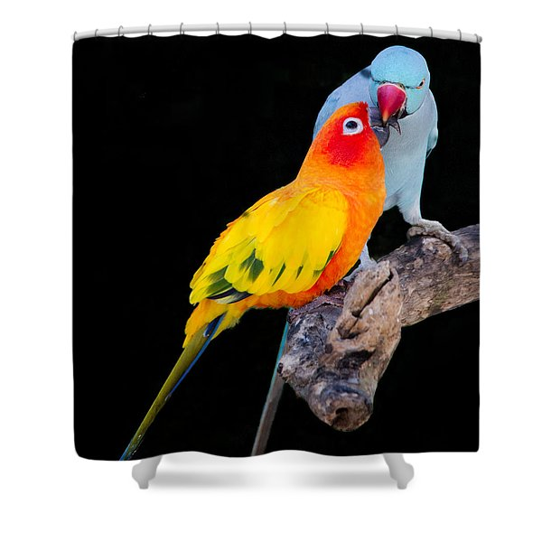 Sun Conure And Ring Neck Parakeet 2 Shower Curtain