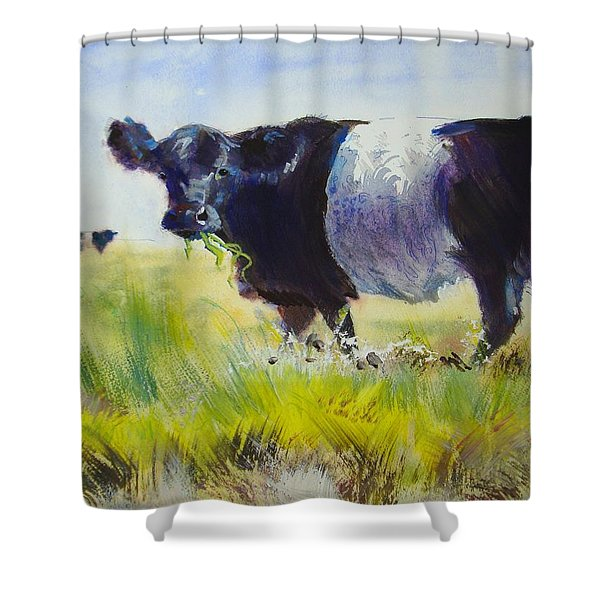 Belted Galloway Cow Shower Curtain