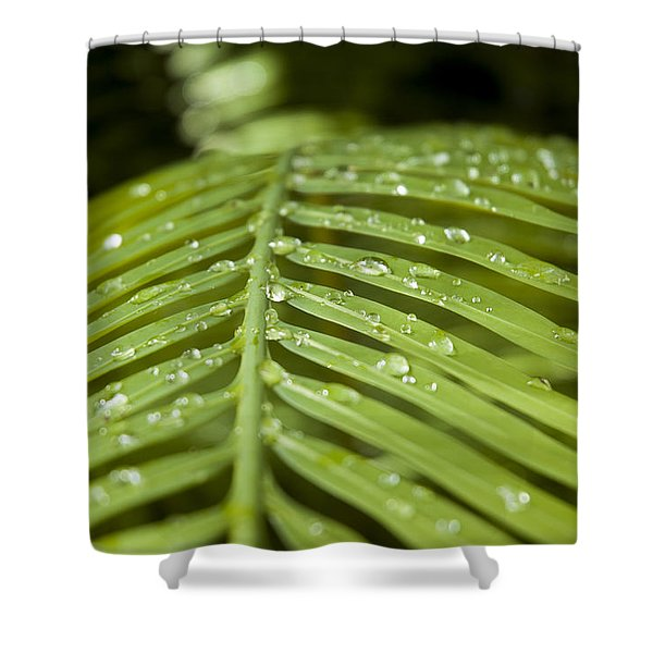 Shower Curtain featuring the photograph Bending Ferns by Carolyn Marshall