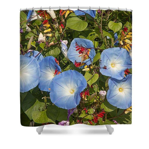 Bhubing Palace Gardens Morning Glory Dthcm0433 Shower Curtain