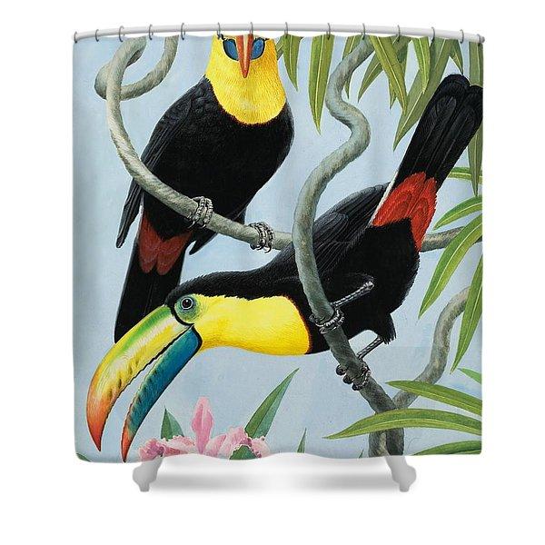 Big-beaked Birds Shower Curtain