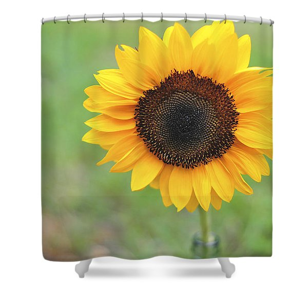 Big Bright Yellow Colorful Sunflower Art Print Shower Curtain