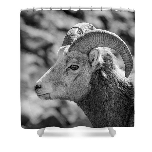 Big Horn Sheep Profile Shower Curtain