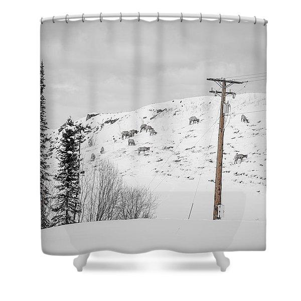 Big Horn Sheep Hinton Hillside Shower Curtain