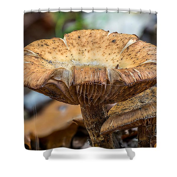 Big Shroom Shower Curtain